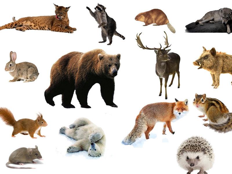 <center><b>Найдено самое глупое животное</center></b>