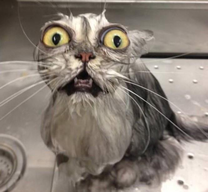 Американец зачитал рэп кошке в ванной (видео)