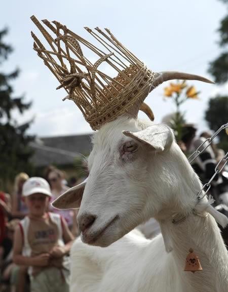 <center><b>Литовцы выбрали самую красивую козу</center></b>