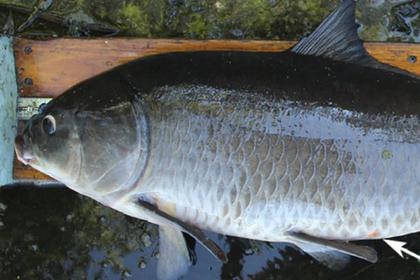 Учёные поймали 112-летнюю рыбу