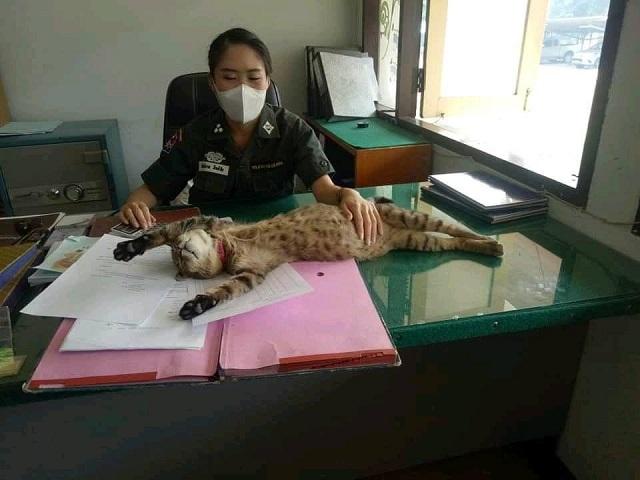 Кот из Таиланда стал полицейским