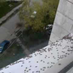 <center><b>Клопы атаковали Барнаул</center></b>