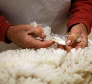 <center><b>Ирландец побил мировой рекорд по стрижке овец</center></b>