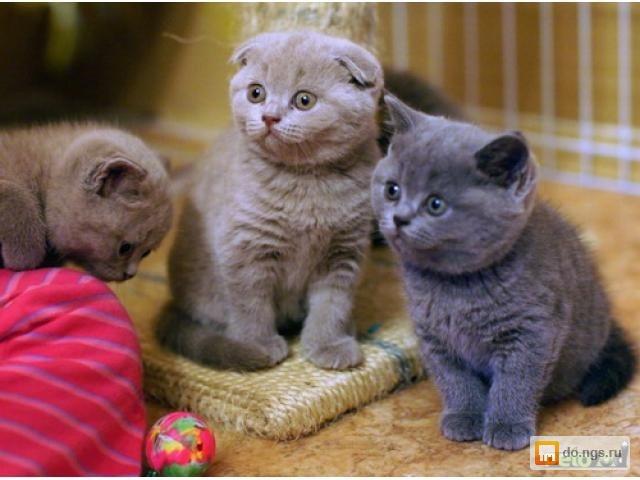 <center><b>В США появилась няня для котят</center></b>
