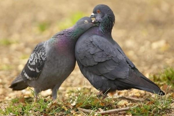 <center><b>Таджикских голубей депортировали</center></b>