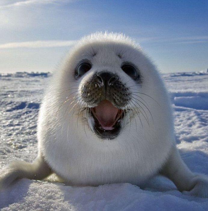 <center><b>Ирландский тюлень ходит в ресторан</center></b>