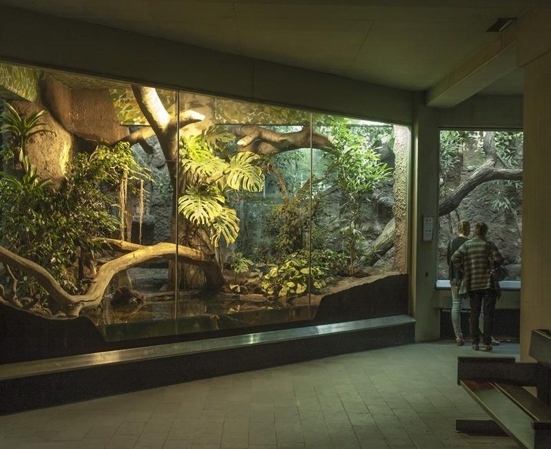 <center><b>Перуанцы увидят живых змей в новом музее</center></b>