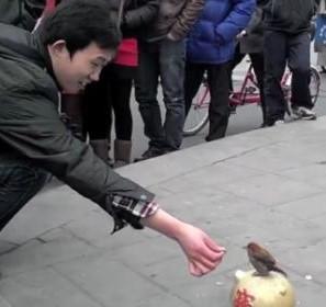 Воробей из Китая, который любит деньги (видео)