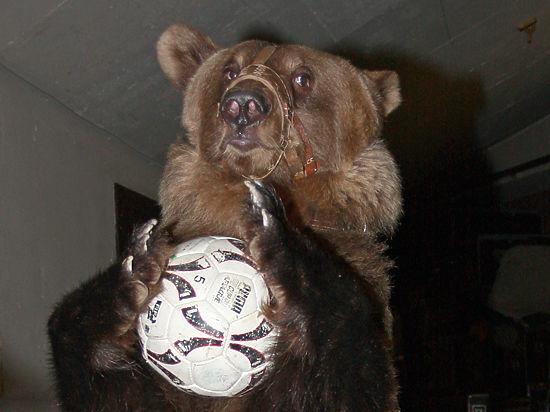 Медведь спас российский футбол (видео)