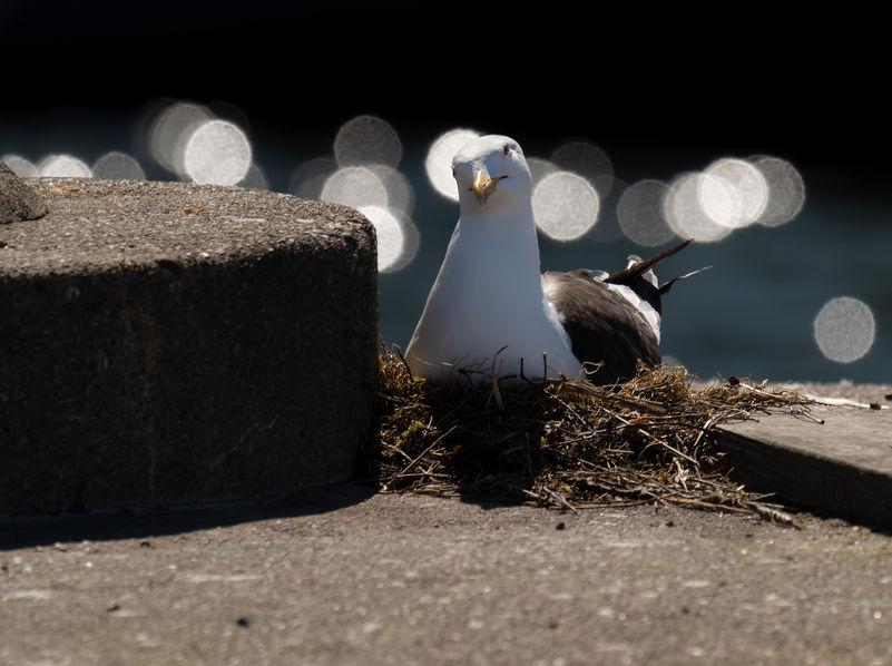 Орнитологи доказали, что птичьи яйца могут общаться
