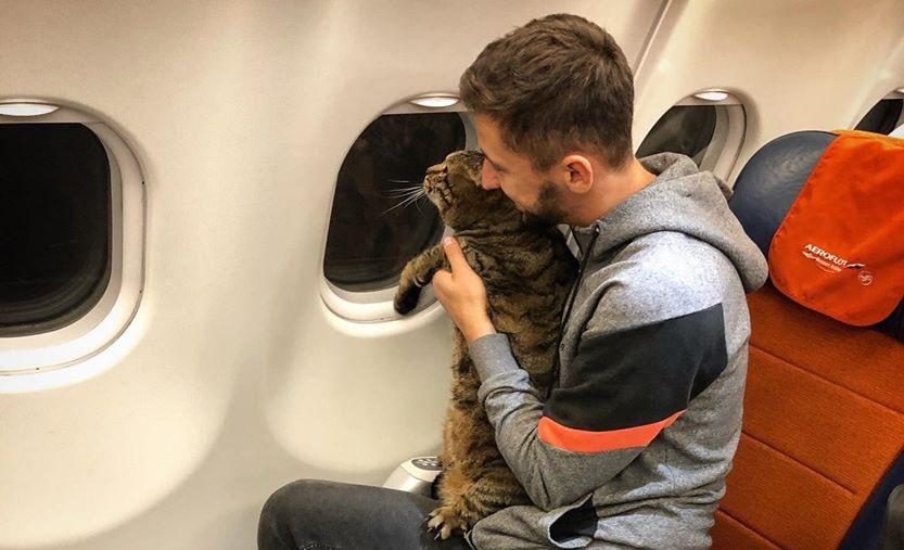 Толстому коту подарят акции авиакомпании «Аэрофлот»