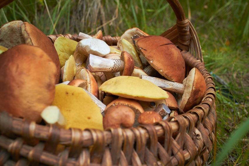 Россияне полюбили грибное сафари