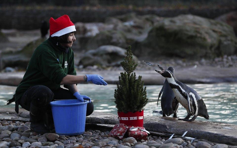 Пингвины из Лондона спасаются от скуки рождественскими фильмами