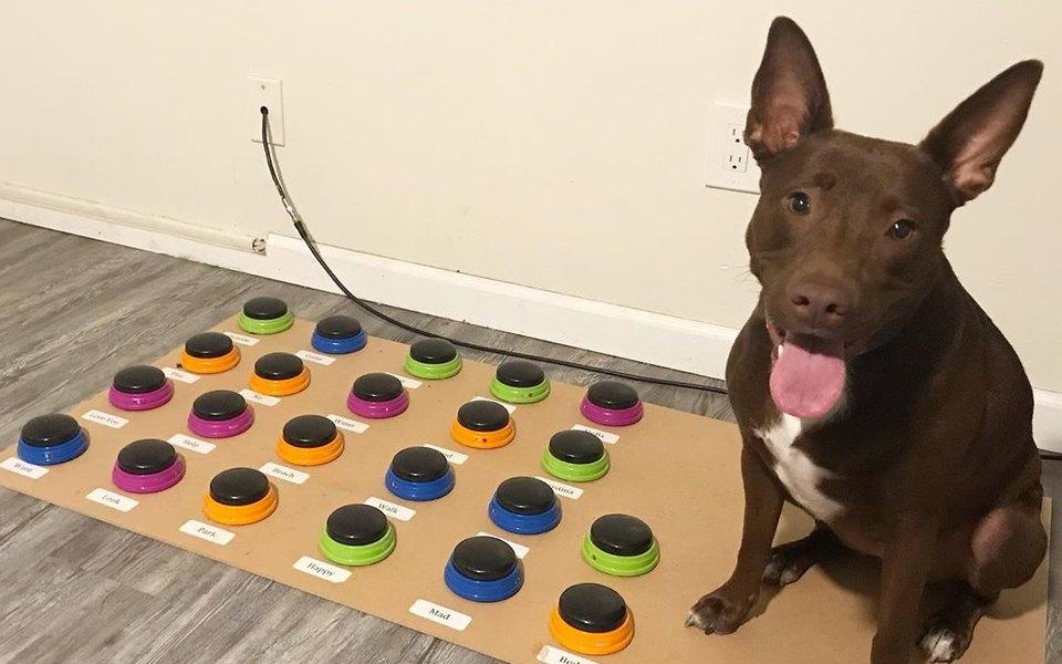 В США собака научилась говорить. В ее лексиконе почти 30 слов