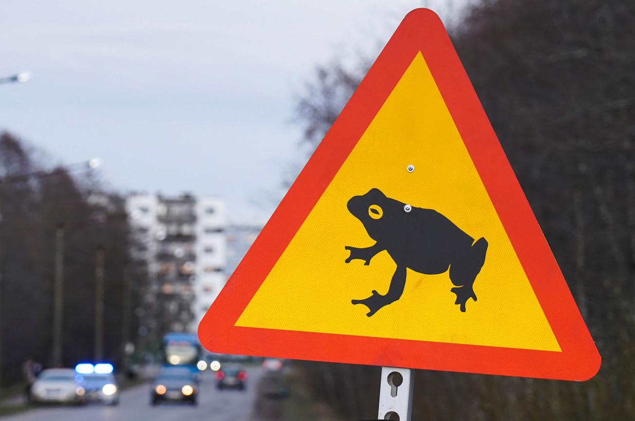 Лягушки оккупировали трассу в Эстонии