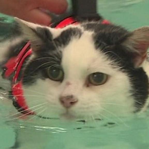 <center><b>Толстый кот худеет в бассейне</center></b>