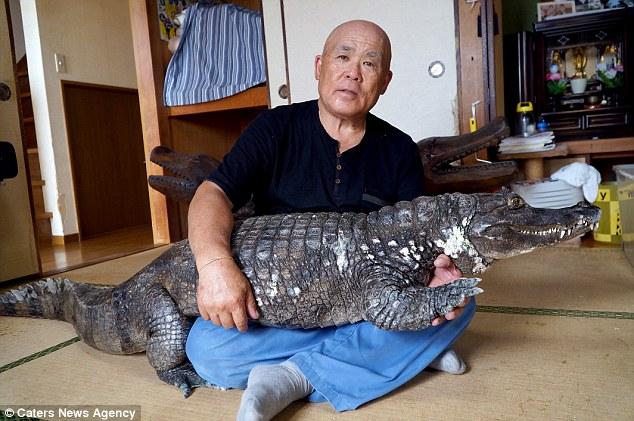Японец до сих пор живет с крокодилом, которого купил 40 лет назад