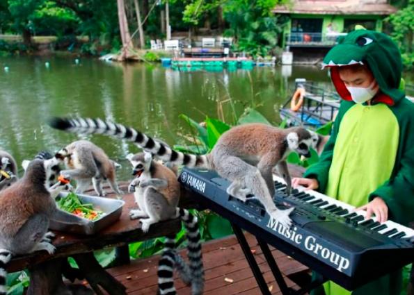 Тайская школьница дает еженедельные концерты для животных