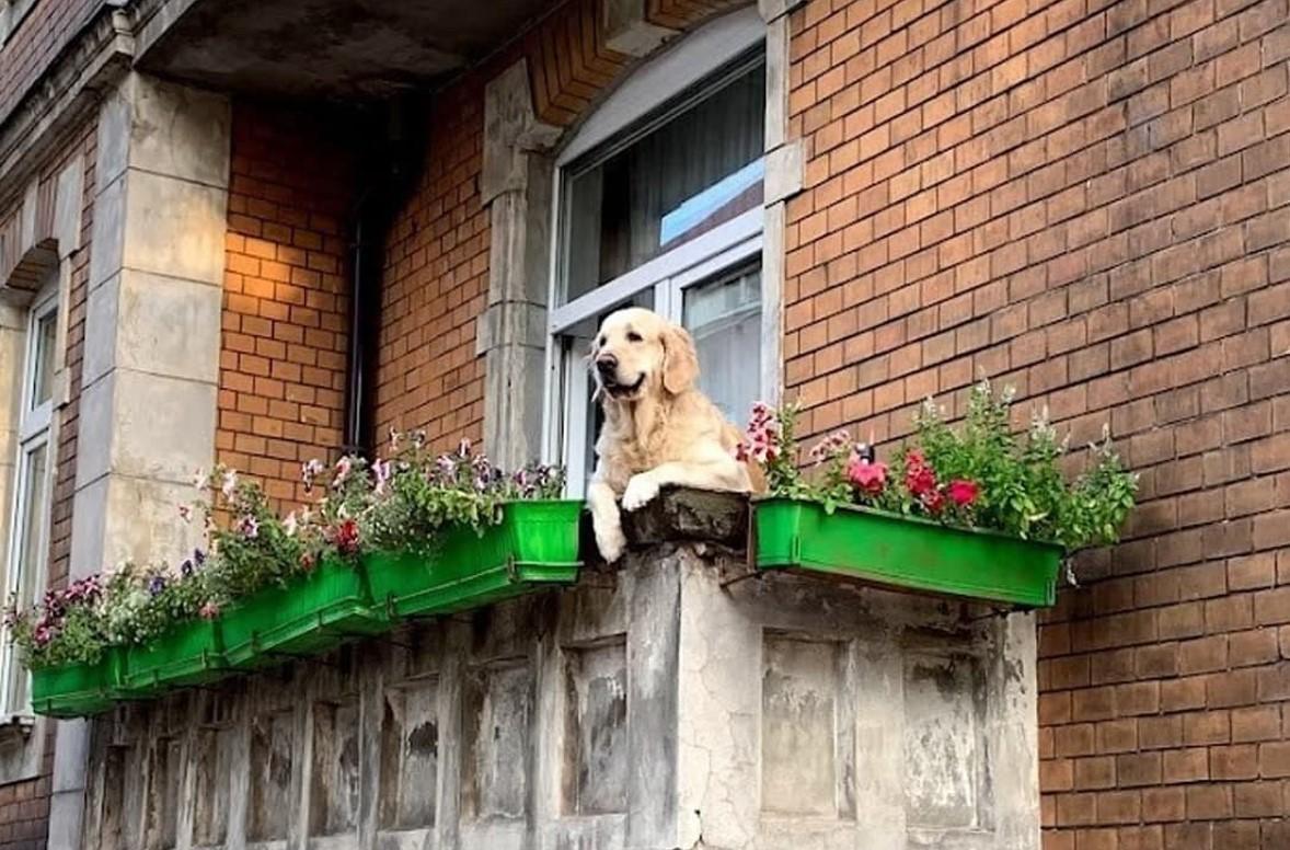 Милый пес на балконе стал интереснее Лувра и Статуи Свободы