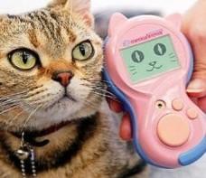<center><b>Люди начнут общаться с кошками</center></b>